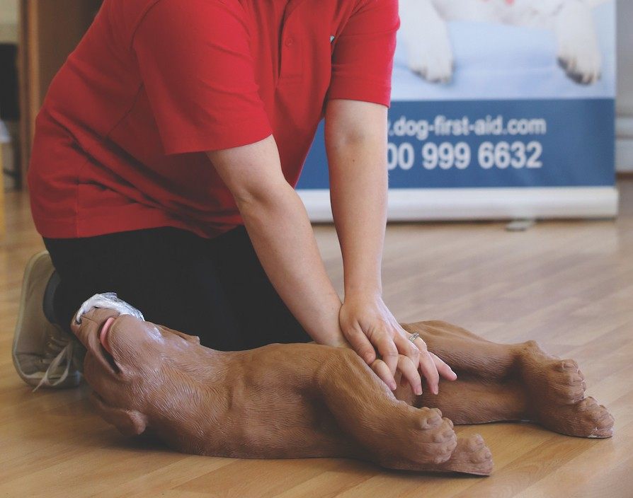 It became clear Dog First Aid was onto something when a client saved their pet's life